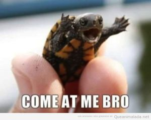 foto-graciosa-tortuga-pequeña-cria